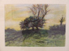 The Clump, Chamberlainstown, Kells. – Thorn – oil pastel